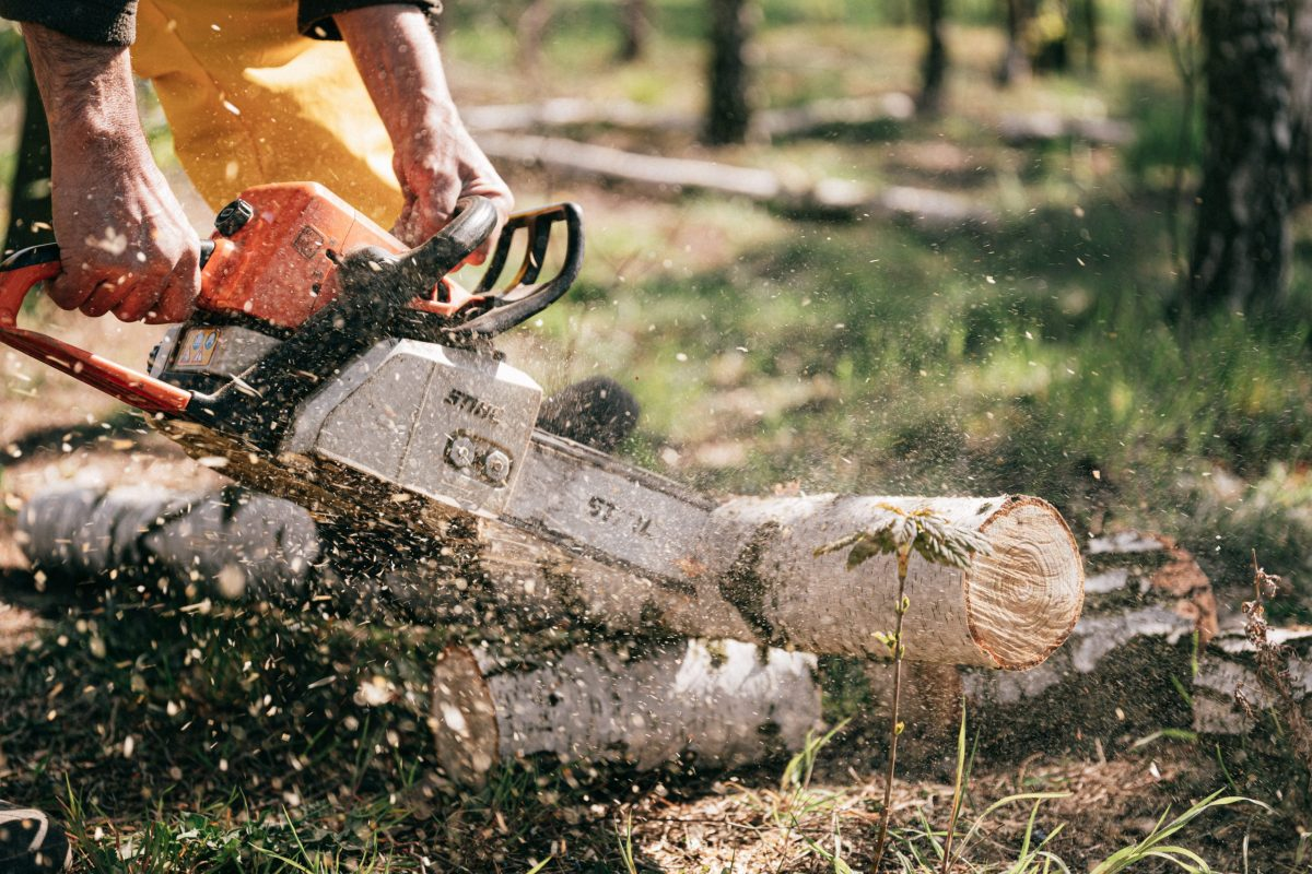 Nashville, TN - tree removal service